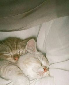 Cute Baby Cats, Cute Little Animals, Cute Funny Animals, Kittens Cutest, Cats And Kittens, I Love Cats, Cool Cats, Photo Chat, Cat Aesthetic