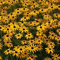 Yellow Chrysanthemum, Wild Flowers, Beautiful Flowers, Garden Design, Planters, Inspiration, September, Shops, Gardening