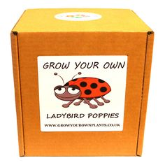 Grow Your Own Ladybird Poppies Plant Kit - Planting kit for children and adults Garden Gifts, Grow Your Own, Planting, Fathers Day, Poppies, Kit, Children, Birthday, Christmas