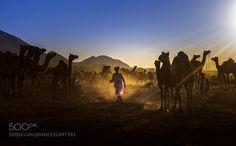 pushkar camel fair rajasthan india by hitesh_hi_2000. Please Like http://fb.me/go4photos and Follow @go4fotos Thank You. :-)