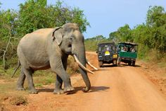 One of the main reasons why people visit Sri Lanka is its diversity of wildlife. Sri Lanka is the home to many species of endemic flora and fauna u. Wildlife Safari, Wildlife Park, Safari Game, Sri Lanka Holidays, Herd Of Elephants, Jim Corbett, Village Hotel, Best Holiday Destinations, African Safari