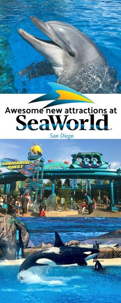 Discover Our Favorite New Attractions At Sea World San Diego This Summer! #MomsatSeaWorld #hosted