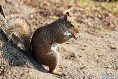 Sit Back & Relax  #500px #nature #squirrels #photography