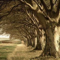 Kingston Lacy, Dorset, England.  Charlie Waite Photography.