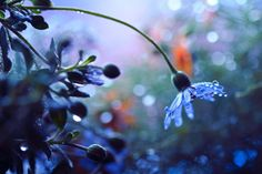 alternativepurple:  ~Blue Daisy~✿