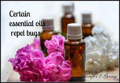 With warm weather, we again must fight bugs in the yard and home.  Here in Florida it's almost a year round battle. If you're like me, the last thing you w… Essential Oil Uses, Pest Control, Bug Control, Bugs, Aromatherapy, Bug Off, Lawn And Garden, July 10, Mosquitoes