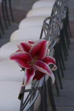 perfect stargazer lily Asiatic Lilies, Stargazer, Lonely, Girly, Wedding Ideas, Fruit, Happy, Flowers, Plants
