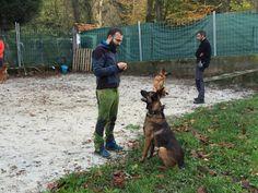 Curso adiestrador canino homologado en Bilbao de Txarrua, Servicios para Mascotas. Promoción febrero 2016.