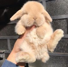 Cute bunny #bunny #cutepets #pethealth #petcare #rabbits #cuteanimals Cute Bunny Pictures, Baby Animals Pictures, Cute Animal Pictures, Bunny Pics, Cute Little Animals, Cute Funny Animals, Cutest Animals, Fluffy Animals, Animals And Pets