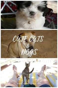 Cute dogs and cats we see when we travel. #cats #dogs #cutepics #travelpics Travel Pictures, Cute Pictures, Fox Facts, Cute Cats And Dogs, Beautiful Places In The World, Travel Around The World, Us Travel, Mammals, Den