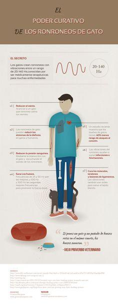 El Poder Curativo de los Ronroneos de Gato [Infografía] #infografia #gatos #salud