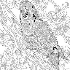 Zentangle Budgie Parrot ➕Coloring Page ➕More Pins Like This At FOSTERGINGER @ Pinterest ➕