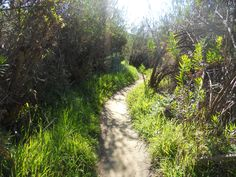 Hiking at the Aliso Viejo park trail in California. Beautiful trail.