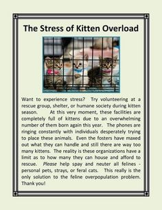 Stress of kitten over load