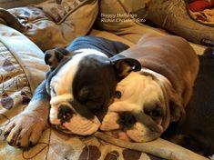 ♥ Baggy Bulldogs ♥ #Buldog