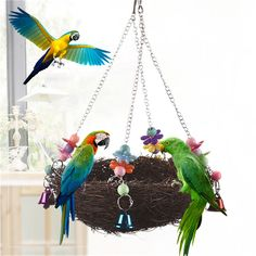 Natural Rattan Bird Swing Nest Toy With Bells Brown Cage Perch Stand For Parrot Chew Toy Budgie Parakeet Cockatiel Birds – Home & Garden Budgie Parakeet, Cockatiel, Budgies, Parrots, Canary Cage, Finch Cage, Parrot Bird, Bird Cages, Bird Toys