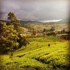 Nuwara Eliya y sus preciosas plantaciones de te. http://viajespordescubrir.com/2015/04/25/nuwara-eliya/