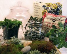 Day 45- Make terrarium centerpieces for our table together.