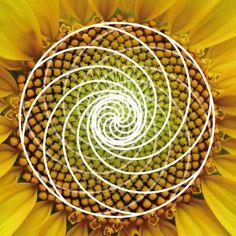 ¡¡Si Fibonacci levantara la cabeza....!! | Matemolivares