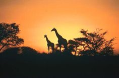 South Africa - Will be going here summer 2012 to visit my sister when she studies there :)