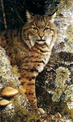 Животный мир от Carl Brenders