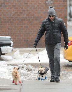 Hugh Jackman Walks His Dogs, Dali and Allegra