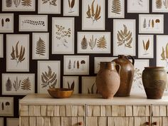 Sanderson Wallpaper - Fern Gallery.  Faithfully recreated from botanical archive drawings of British ferns this eye-catching wallpaper creates a dramatic backdrop for any interior.