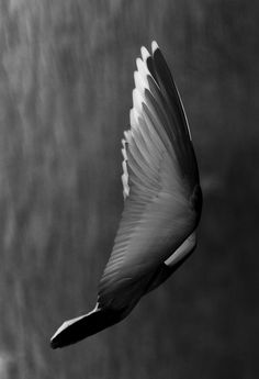 Hide me oh hide me in the shadow of thy wings for there I shall find rest for my troubled soul.