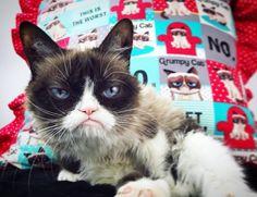 The world's grumpiest cat! Grumpy Cat Meme, Cat Memes, Meme Caption, Good Ol, Rainy Days, Pretty Pictures, Funny Cats, Bunny, Pets