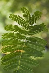 How to Grow Ferns From Clippings thumbnail