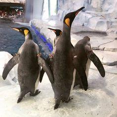 Detroit Zoo, Penguins, Animals, Animales, Animaux, Penguin, Animal, Animais