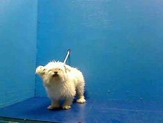 EXTREMELY URGENT**10 YR OLD MASON'S OWNER DIED AND LEAVING HIM WITH NO PLACE TO GO...NOW, HE WILL BE KILLED/EUTH TOMORROW/ MONDAY/ APRIL 15, 2013 ~NEW YORK DEATH ROW DOGS~~PLEASE NEEDS ANGEL TO SAVE MASON NOW!!  For more information on adopting please read the following: https://www.facebook.com/Urgentdeathrowdogs/app_137541772984354?ref=ts