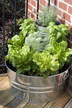 Nooit kruiden in huis als je ze nodig hebt? Zet ze gewoon in je tuin. Kruiden doen het ook prima als bodembedekker en krijgen vaak mooie bloemen. Stroop je mouwen op en maak je eigen kruidentuin!