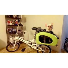 Great developing IBIYAYA pet stroller from 5 in 1 to 6 in 1 modes!!!!! This is so cool and a great way to use on bike  IBIYAYA multifunction stroller as well. How awesome this carrier suites for many situations. Superb!  #ibiyayastroller  #Frenchbulldog #bulldogclub  #bike #petcarrier #Dogstroller #bulldogs #travelwithpet  #travelwithbike #ibiyayadogstroller #petstroller