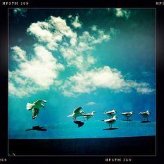 Seagulls, Gold Coast