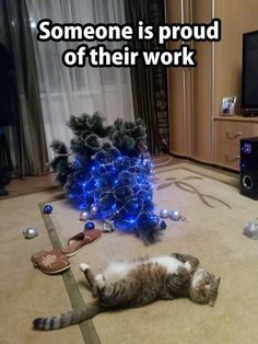 Click the Photo For More FUNNY and Cute Cat Videos and Photos - Katzenbilder - Funny Animal Memes, Dog Memes, Funny Animal Pictures, Cute Funny Animals, Funny Cats, Funny Memea, Ironic Memes, Funny Horses, Hilarious