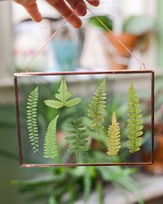 http://sosuperawesome.com/post/157127356629/pressed-leaf-and-flower-wall-hangings-and-coasters