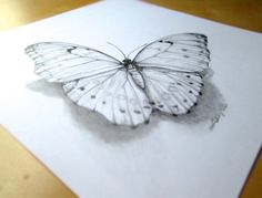 butterfly art - White Morpho In Pencil - original graphite pencil art - Morpho polyphemus butterfly - 12 by 12 inches - 30.5 cm by 30.5 cm on Etsy, $55.00