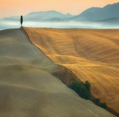 Lone cypress. Asciano, Tuscany.