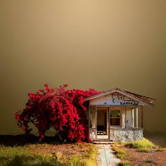 Beautiful abandoned cottage and overgrown crepe myrtle. Lovely against the smoggy background.