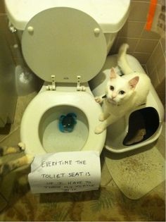 36 Hilarious Shamed Animal Pics  #funnycats #funnydogs #funnyanimals #funnypics #funnyhorses