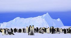 Welcome to Antarctica:The Most Fascinating Place on Earth | Huntsends.com