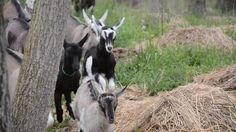 #goatvet likes this video of kids playing outside set to music