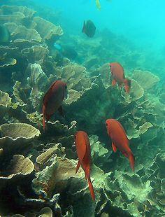 ATIMOO plongée Madagascar - massif des roses Ifaty