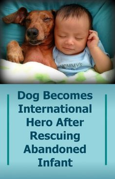 Dog Becomes International Hero After Rescuing Abandoned Infant!