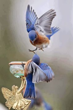 beautiful amzing lovely place - Animals/Birds - Community - Google+