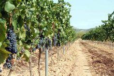 Herms Wine Lokal, Wine, Fruit, Wine Making
