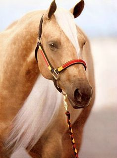 Palomino AQHA champion reining mare, Make It With A Twist.