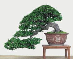 象牙樹-2.jpg (768×624)