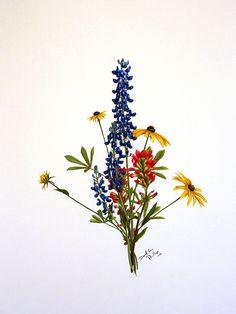 David Phillips Art Wildflower Drawings, DavidPhillipsArt.com,
